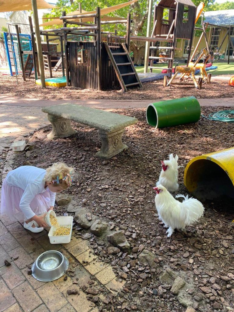 Feeding the chickens at Kildare