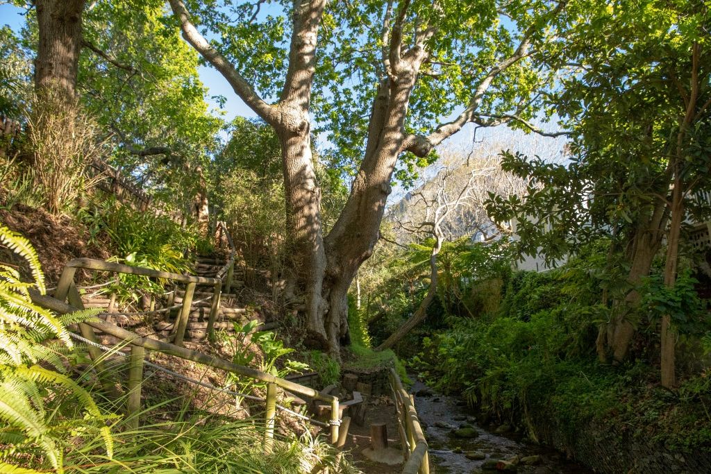 Kildare Nature Reserve images (4)